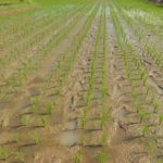 152-info-keg-pertanian-a